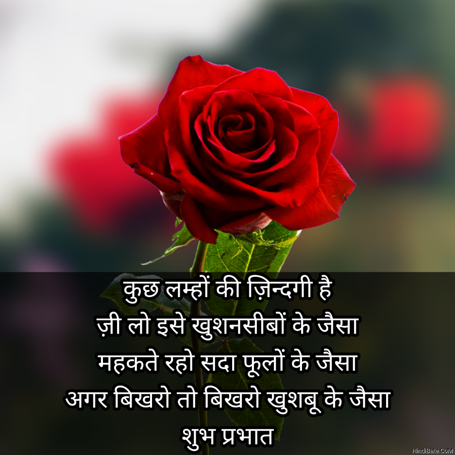 Good Morning Quotes With Rose Images