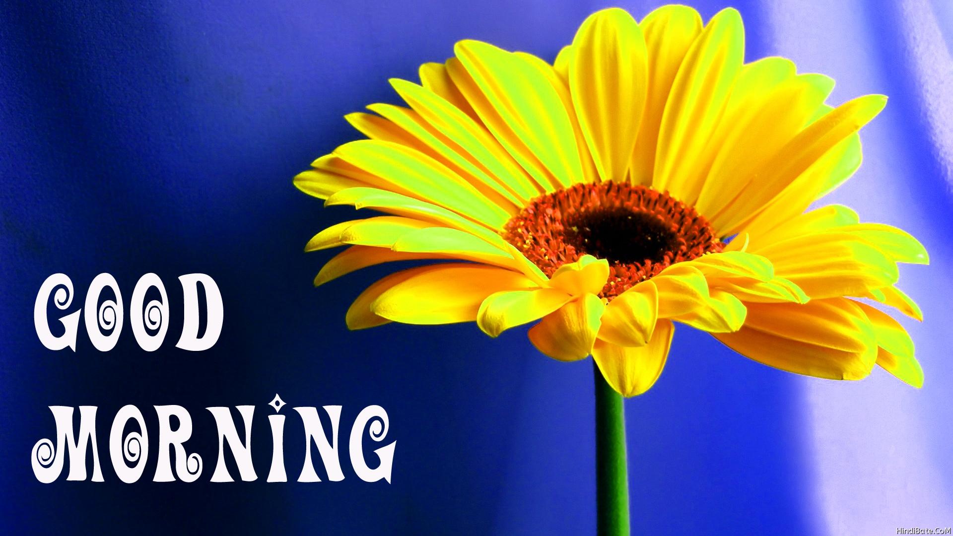 Good Morning beatiful flower