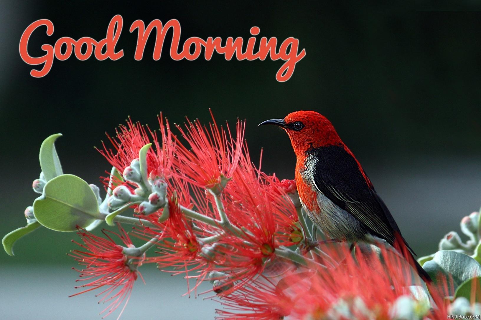 Good morning nature bird image