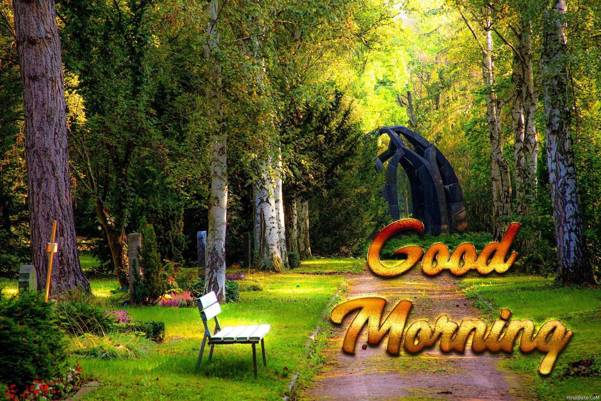 Good morning nature park image