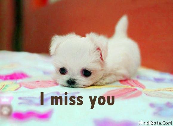 I miss you cute puppy