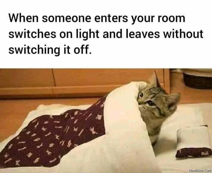 Cat Memes in Hindi